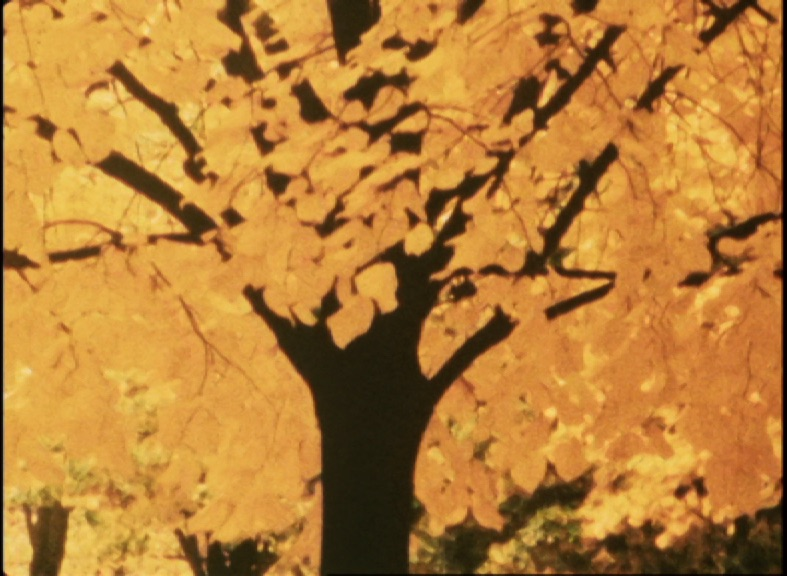 Film still: tree with glowing yellow leaves
